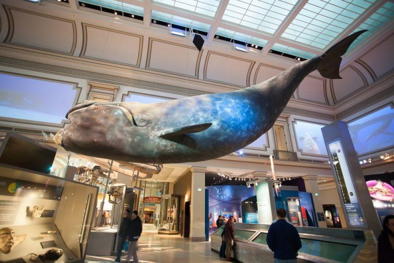 Que voir et faire au Musée National d'Histoire Naturelle à Washington ?