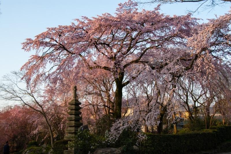 Oita - Jardin Sano
