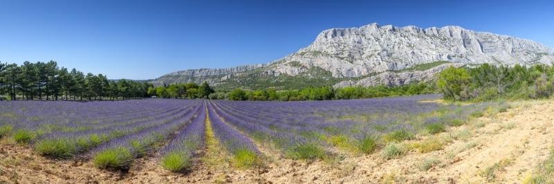 Aix en Provence Sainte Victorie lavandes