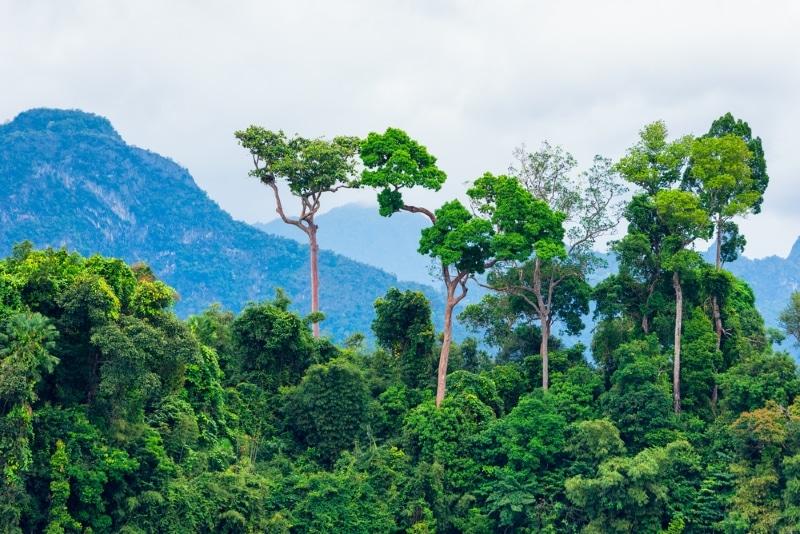 Colombie arbres d'Amazonie
