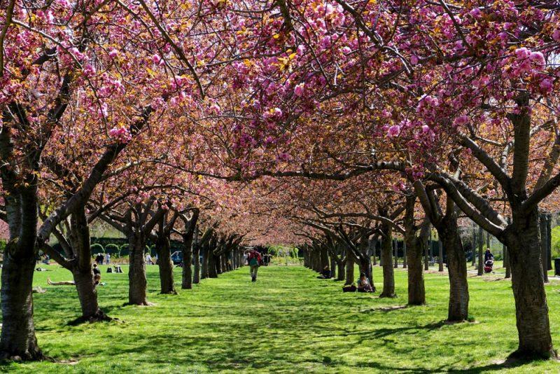 Histoire du jardin botanique à New York