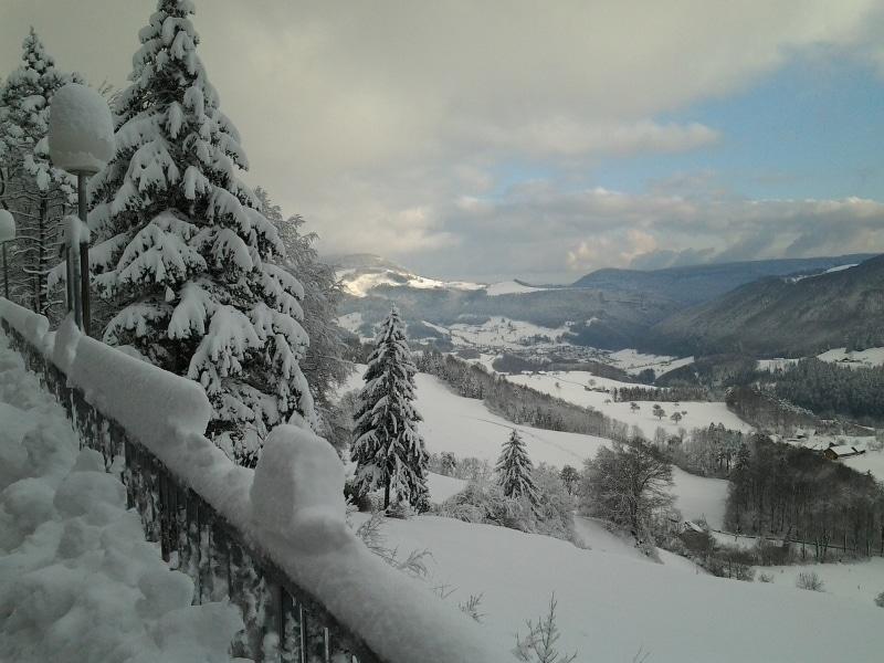 Jura chien de traineau Morbier sous la neige