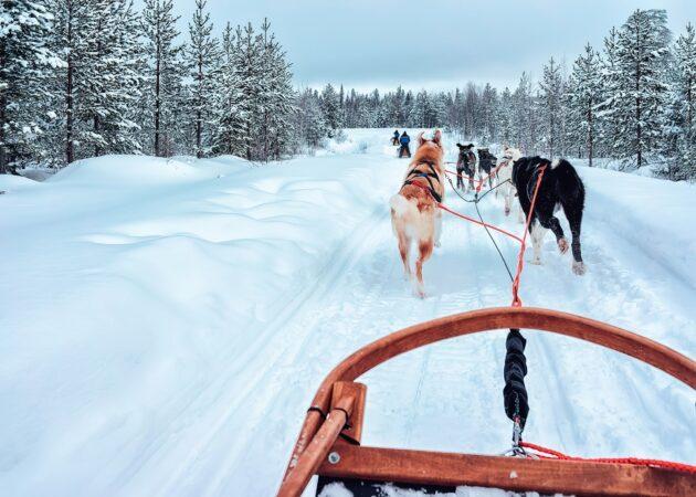 12 endroits où faire du chien de traîneau dans le Jura