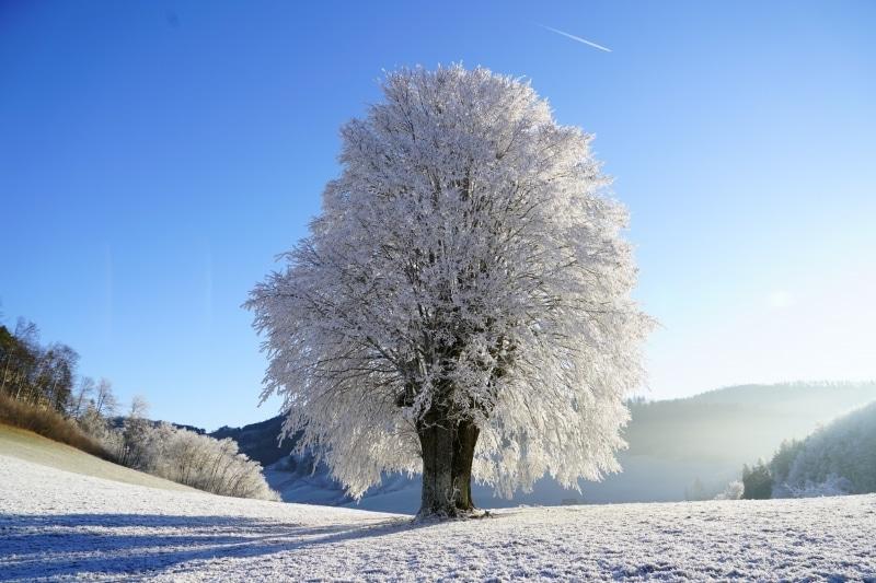 Septmoncel dans le Jura - arbre gelé