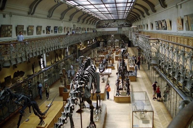 museum histoire naturelle paris galerie paleontologie