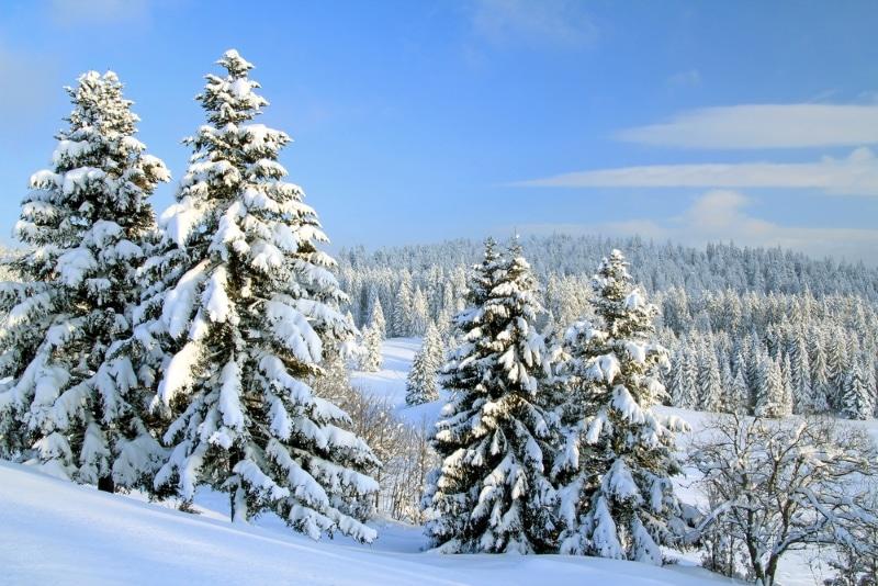 station de ski jura sapins sous la neige