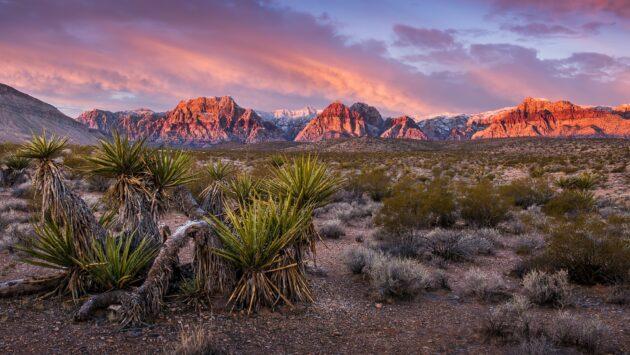 Visiter le Red Rock Canyon depuis Las Vegas : billets, tarifs, horaires