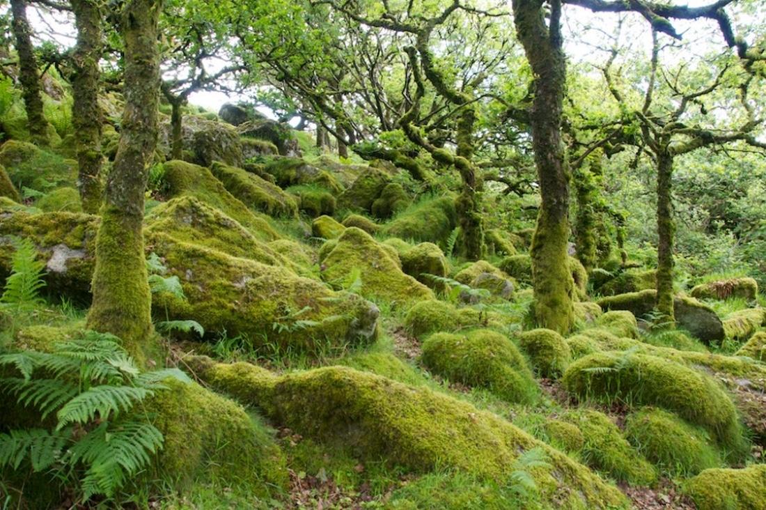 Wistman's wood - forêt de chênes