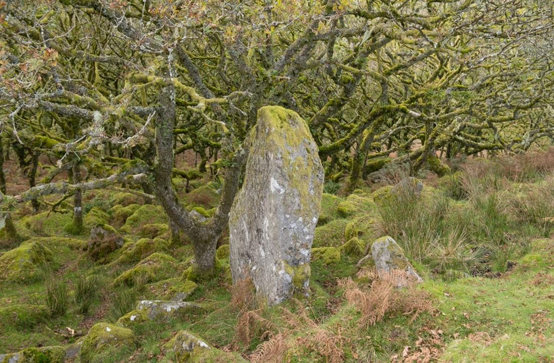 Wistman's Wood - Menhir