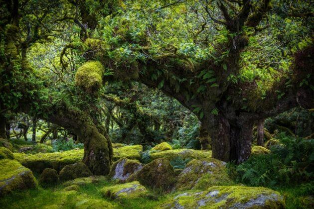 Wistman's Wood : la forêt secrète hors du temps du Royaume-Uni !