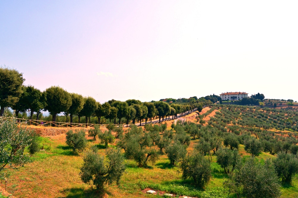 Vignoble à Carmignano, Toscane