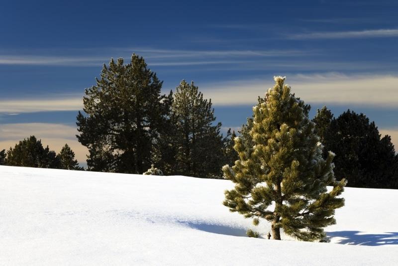 chien traîneau paysages des pyrenees