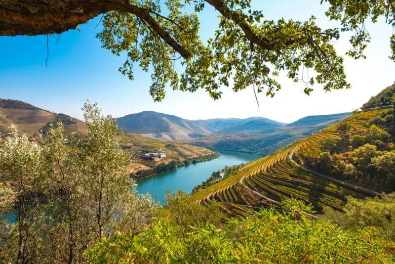 Vignoble dans la vallée de Douro, Portugal