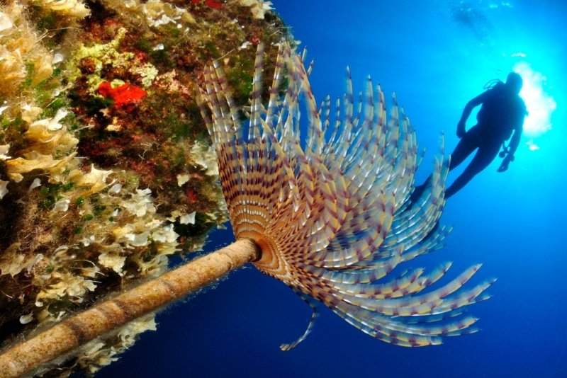 faire de la plongee sous marine a ithaque en grece