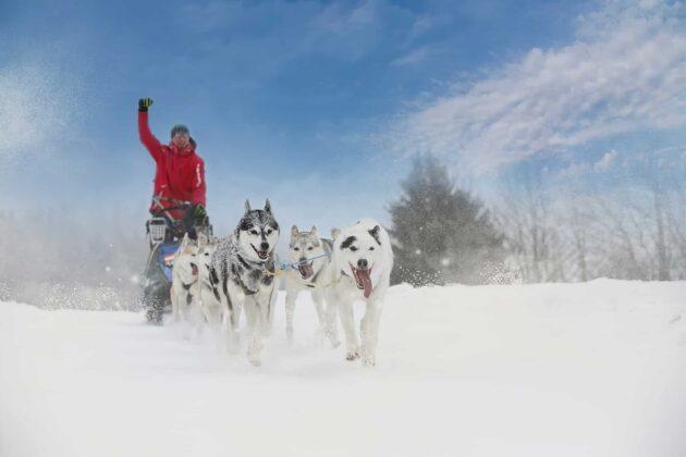 9 endroits où faire du chien de traîneau dans les Pyrénées