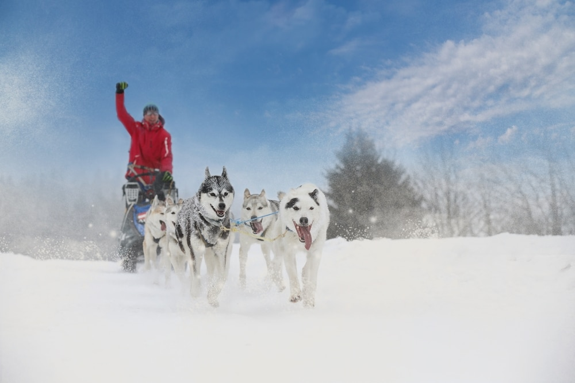 Activités outdoor à faire dans les Pyrénées : chien de traineau
