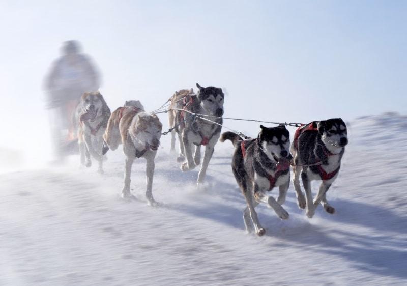 Faire du chien de traîneau dans les Pyrénées