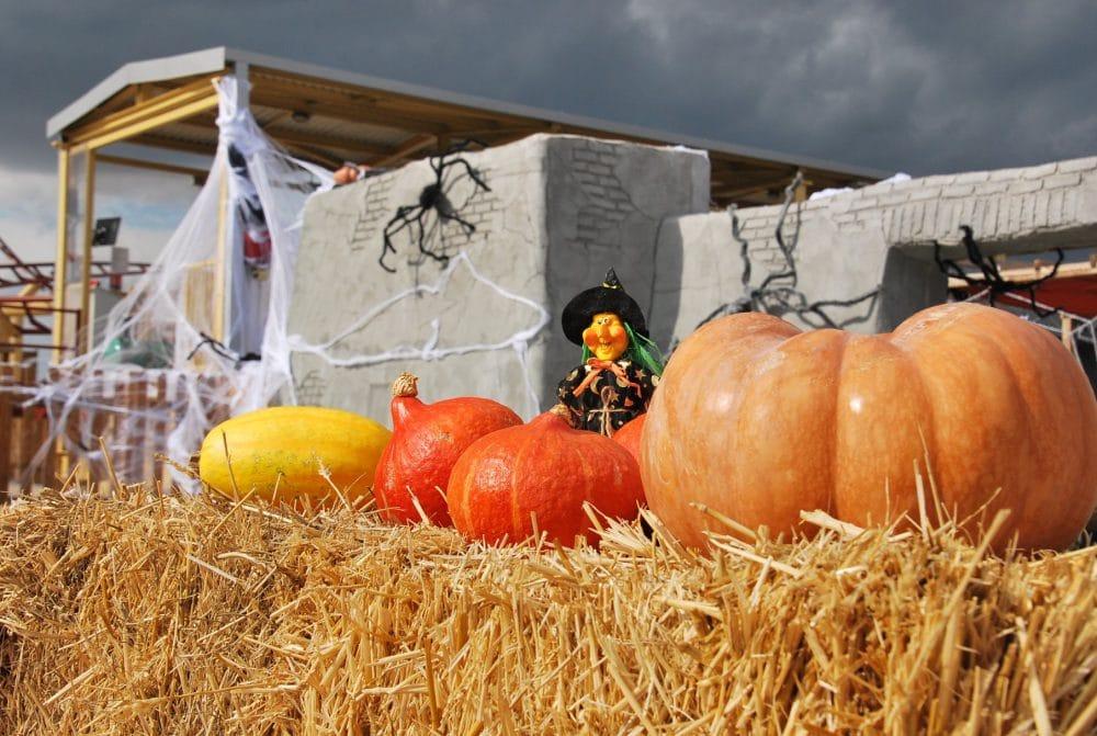 Le Spirou, Halloween, Avignon
