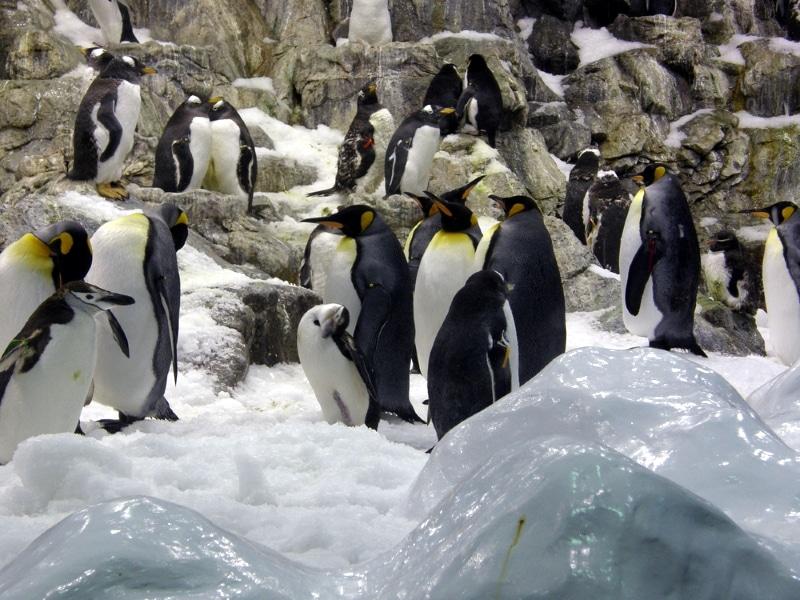 Loro Parque zone des pingouins tenerife