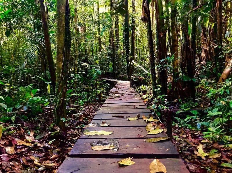 Parc Omagua, Amazonie