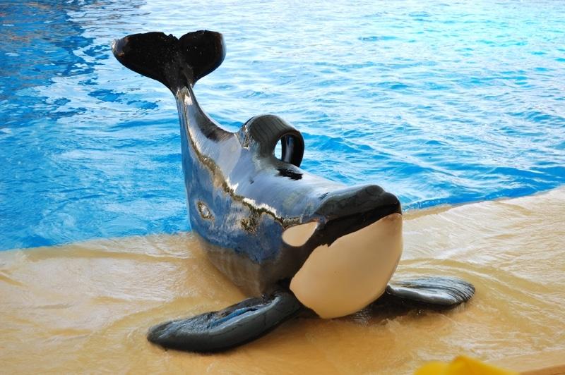 orques loro parque tenerife