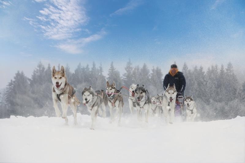 où faire du chien de trainer en Ariège pyrénées