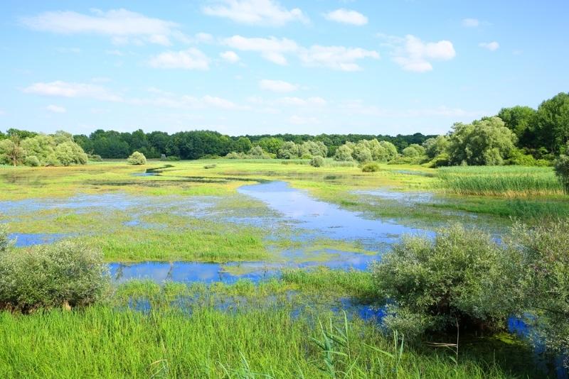 Les plus beaux parcs naturels de France : le parc naturel national de la foret orient champagne ardennes dans aube