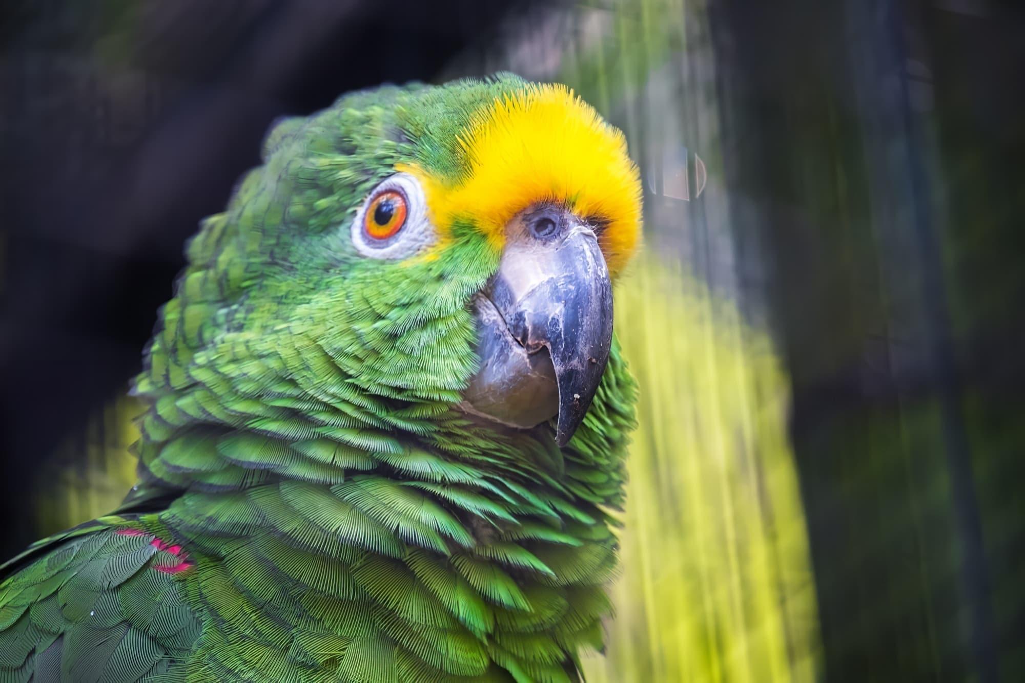 perroquet Loro Parque tenerife