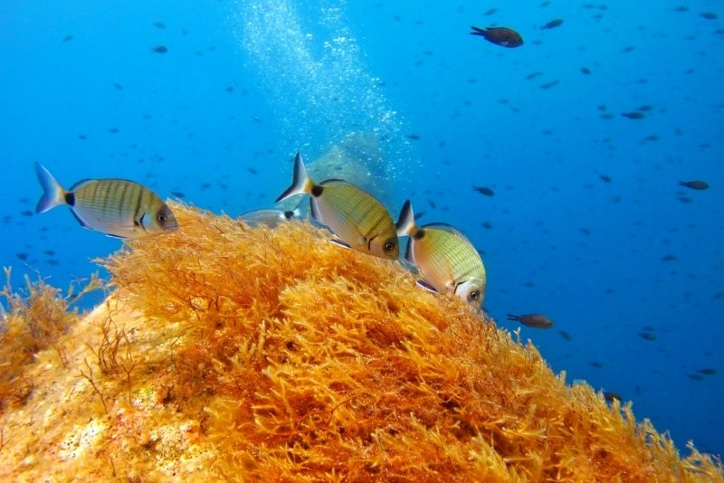 plongée à Chypre