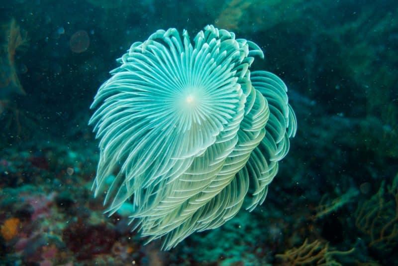 Spirographe, plongée à Paros