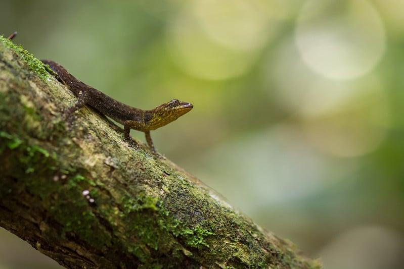 Réserve naturelle de Tanimboca, Colombie