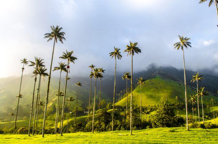 vallee-de-cocora-colombie