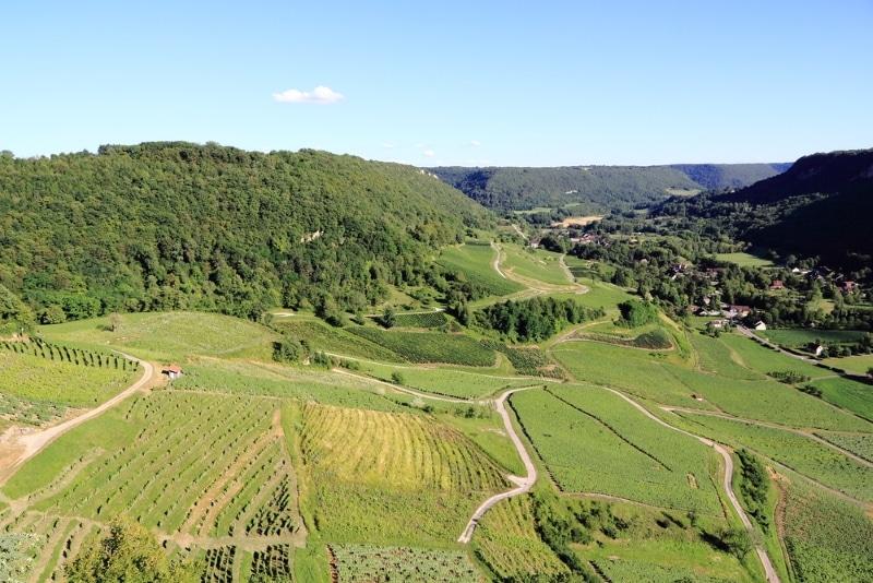vignes dégustation vin jura a arbois