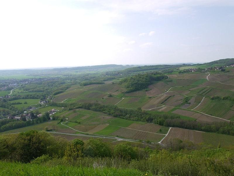 Vin du Jura : vignes à L'Etoile