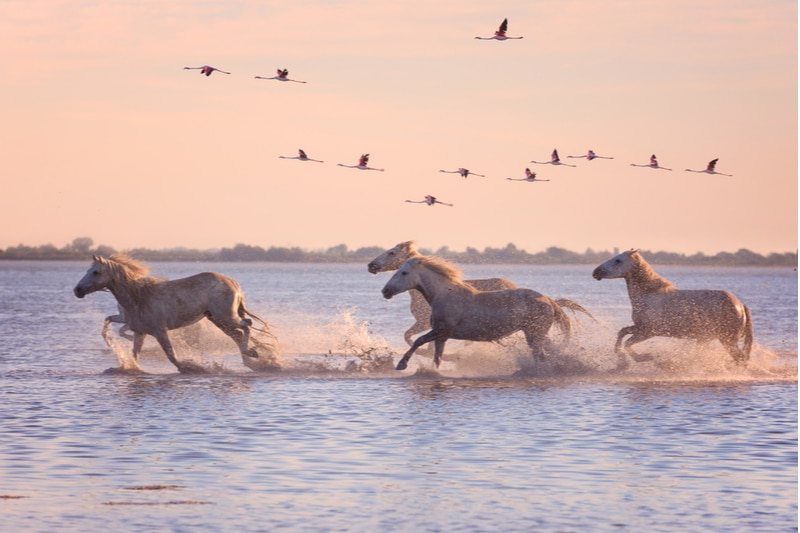 Visiter le parc national naturel de Camargue