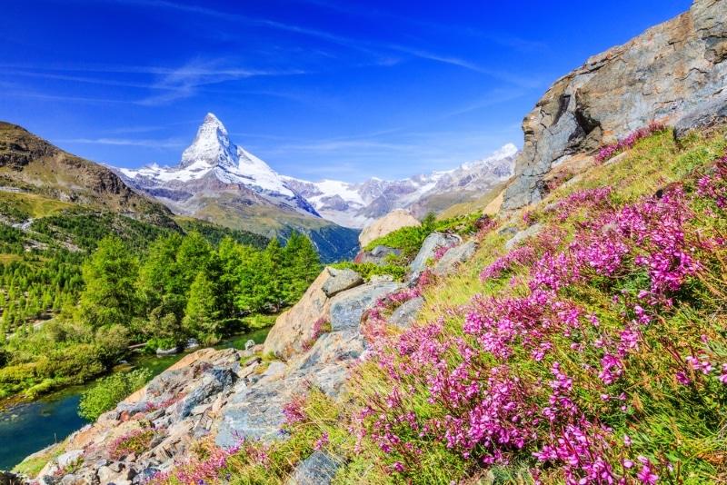 zermatt suisse montagnes fleuries