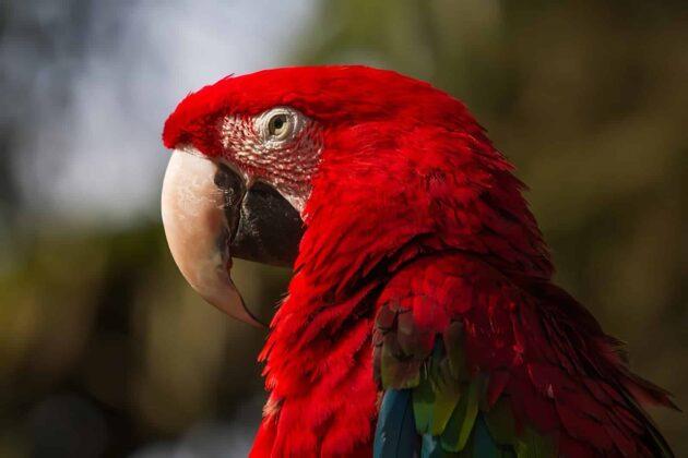 Visiter le Zoo de La Flèche : billets, tarifs, horaires
