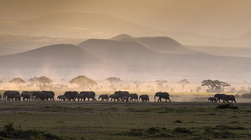 Elephants, parc national Amboseli