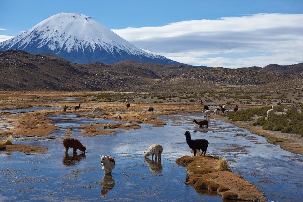 alpaga parc national laica riviere montagnes
