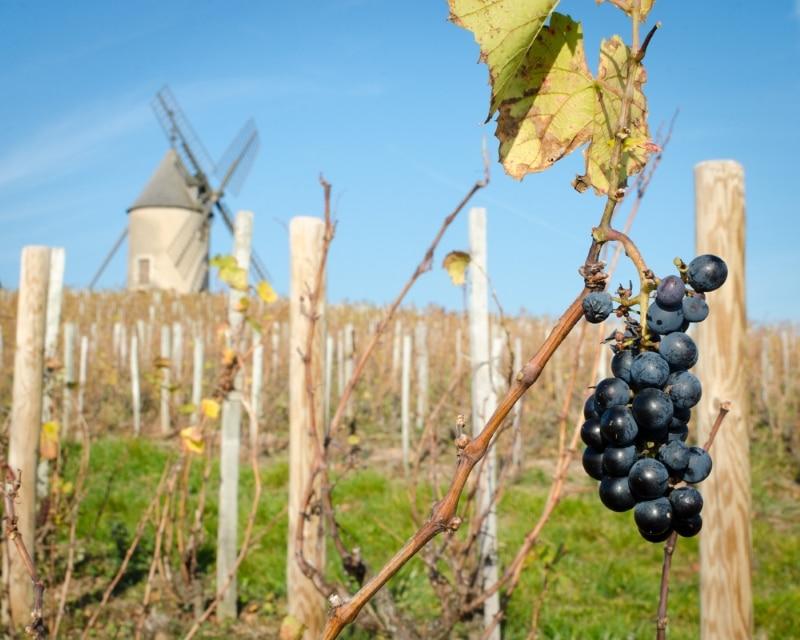 bourgogne le moulin a vent du beaujolais