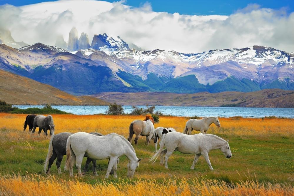 chevaux torres del paine glaciers et lacs