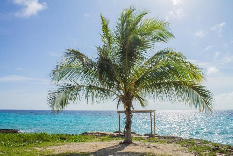 cuba plage avec un palmier