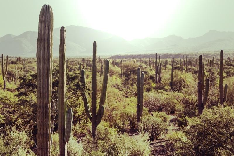 desert cactus mexique. Passer l'hiver au soleil, meilleure destination
