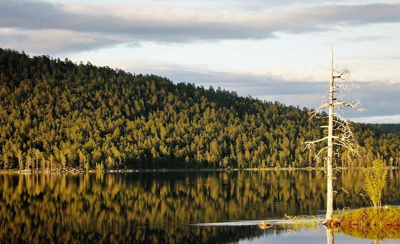 Visiter la Laponie en été