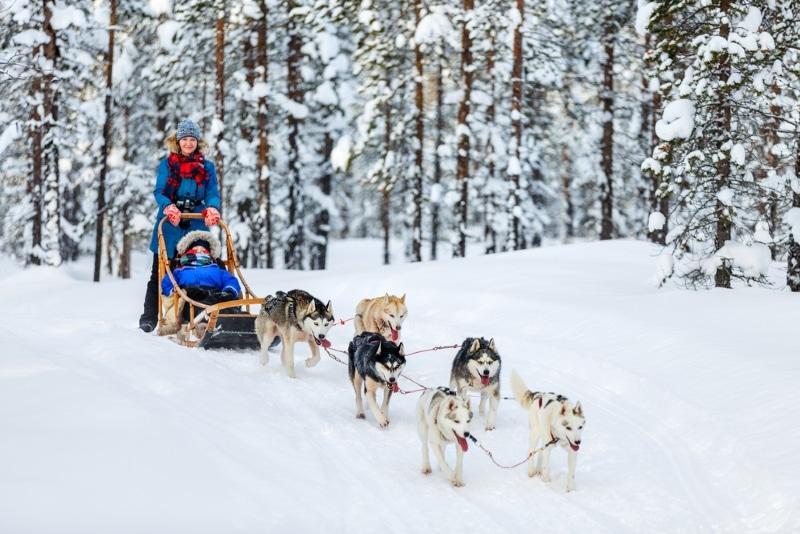 faire du chien de traineau dans les alpes en isere