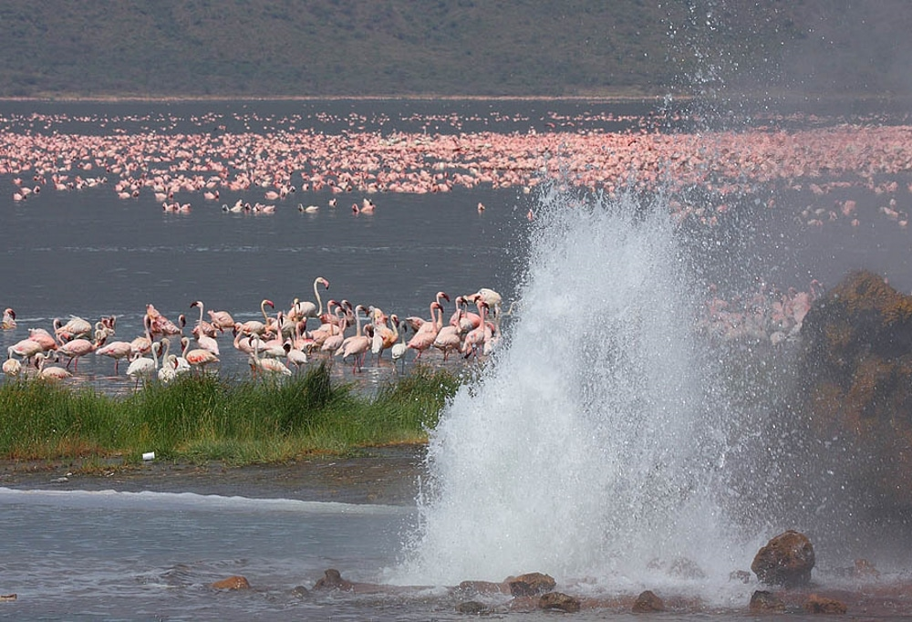 geyser avec flamands roses dans le parc national hells gate au kenya