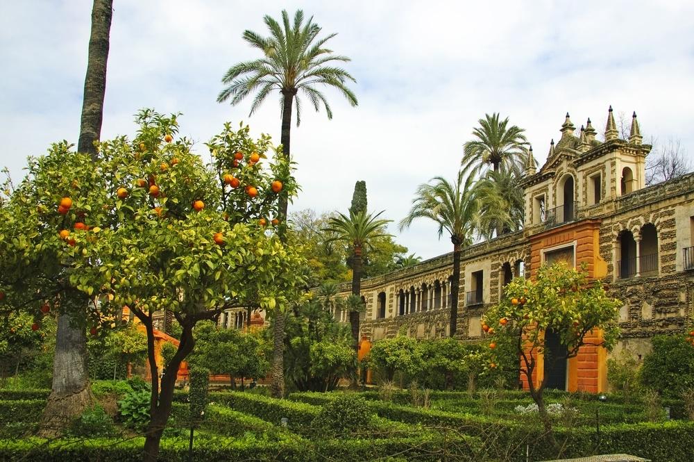 jardins alcazar seville orangers