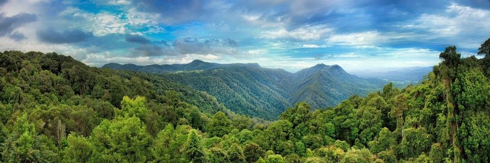 jungle australie
