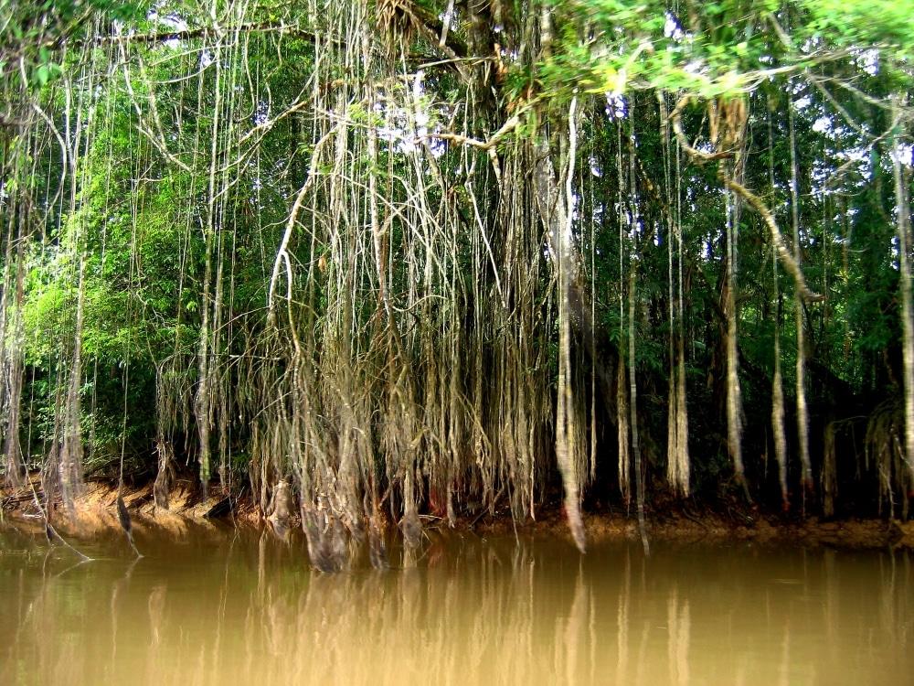 jungle avec eau equateur