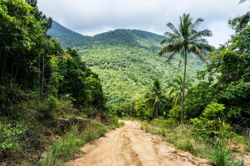 jungle cambodge